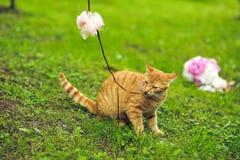Gato vermelho em um casamento com a decoração fotografia de stock royalty free