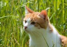 Gato vermelho na grama fotografia de stock