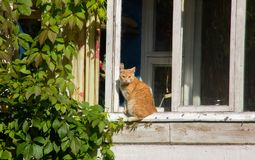 Gato vermelho na soleira imagens de stock