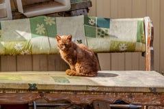Gato vermelho no banco Imagem de Stock Royalty Free