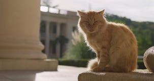 Gato vermelho no fundo da arquitetura Gato vermelho em Grécia Gato com um olho dorido Estática Ginger Cat de Santorini vídeos de arquivo