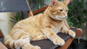 Gato vermelho no jardim home Imagens de Stock