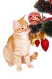 Gato vermelho perto dos ramos de árvore do Natal Imagens de Stock