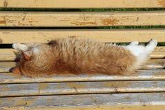 Gato vermelho que dorme no banco amarelo Fotos de Stock Royalty Free