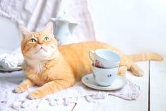 Gato vermelho que encontra-se perto dos utensílios de mesa brancos fotos de stock
