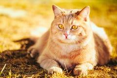 Gato vermelho que senta-se na grama verde da mola Imagens de Stock