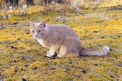 Gato vermelho que senta-se na metade-volta Fotos de Stock