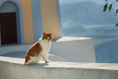 Gato vermelho que toma sol no sol Imagem de Stock