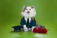 Gato vestido como general Imagen de archivo