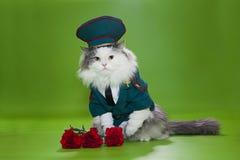 Gato vestido como general Fotos de archivo