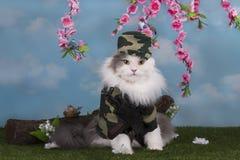 Gato vestido como paz militar del guardia en el bosque Foto de archivo libre de regalías