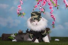 Gato vestido como paz militar del guardia en el bosque Imagen de archivo libre de regalías
