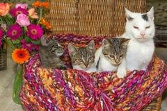 Gato viejo con el gatito de tres jóvenes Fotos de archivo libres de regalías