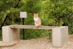 Gato vigilante en Epidavros, Grecia imagen de archivo libre de regalías