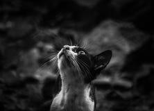 Gato visionário imagem de stock