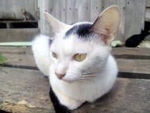 Gato Vista animal Imagens de Stock