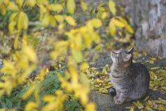 Gato y árbol amarillo Foto de archivo libre de regalías