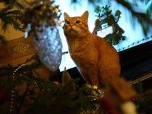 Gato y árbol rojos Gato hermoso al lado del árbol de navidad fotos de archivo libres de regalías