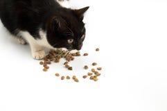 Gato y alimento para animales Imagen de archivo
