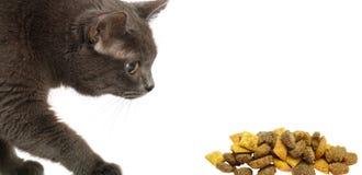 Gato y alimento seco fotografía de archivo