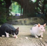 Gato y arroz pegajoso Imagen de archivo libre de regalías