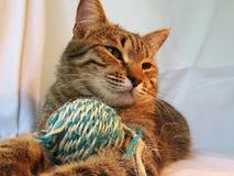 Gato y ball4 Imagen de archivo