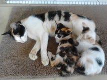 Gato y bebé Fotos de archivo