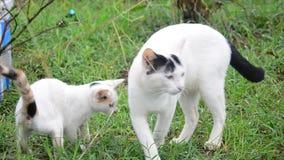 Gato y bebé jovenes Cat Playing en jardín