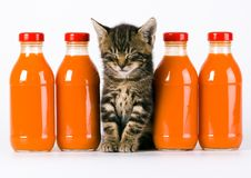 Gato y bebida anaranjada Fotografía de archivo