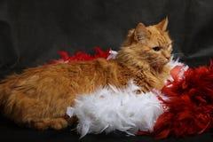 Gato y boa Imagenes de archivo