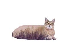 Gato y bosque Fotografía de archivo