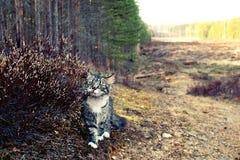 Gato y brezo Foto de archivo