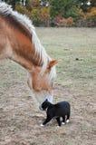 Gato y caballo Imagenes de archivo
