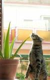 Gato y cacto Foto de archivo libre de regalías