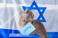 Gato y caja lindos del voto el día de elección sobre fondo de la bandera de Israel imagen de archivo libre de regalías
