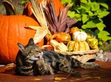 Gato y calabazas de gato atigrado Imagenes de archivo