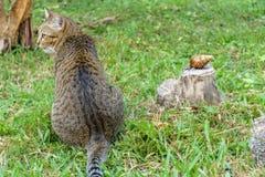 Gato y caracol imagenes de archivo