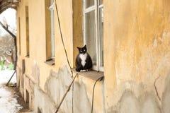 Gato y casa vieja, espacio urbano de la ciudad imagen de archivo