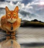 Gato y cielo imágenes de archivo libres de regalías