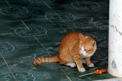 Gato y comida tailandesa Fotografía de archivo