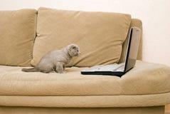 Gato y computadora portátil Fotografía de archivo libre de regalías