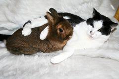 Gato y conejito de abrazo Fotos de archivo libres de regalías