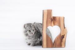Gato y corazón Foto de archivo libre de regalías