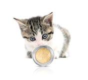 Gato y dinero Imagen de archivo libre de regalías