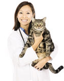 Gato y doctor veterinario Fotografía de archivo libre de regalías
