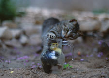 Gato y el pato Imágenes de archivo libres de regalías