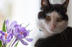 Gato y flores Fotos de archivo