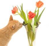 Gato y flores Imagen de archivo