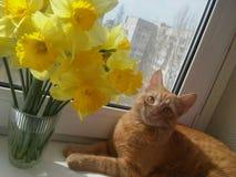 Gato y flores Foto de archivo libre de regalías