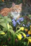Gato y flores en jardín Fotos de archivo
